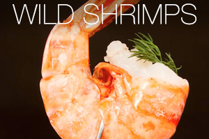 wild_shrimps_txt